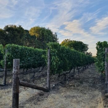 Sky & vines