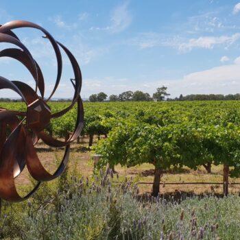 Lake Breeze vineyard