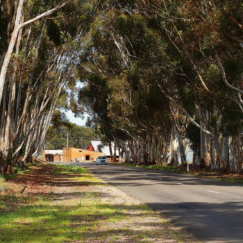 Tree-lined Scenic Drive